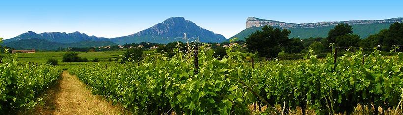 Côtes de Provence, Coteaux du Languedoc, Vins du Sud-Ouest